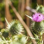 The Thistles In Our Collaborative Divorce Garden