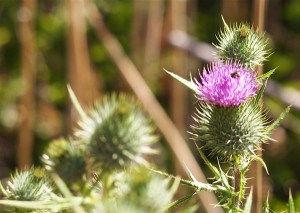 flower thorns